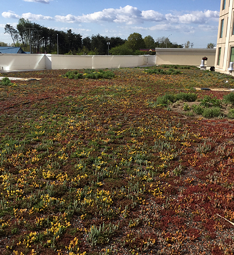 green roof history: EcoCline green roof sedum