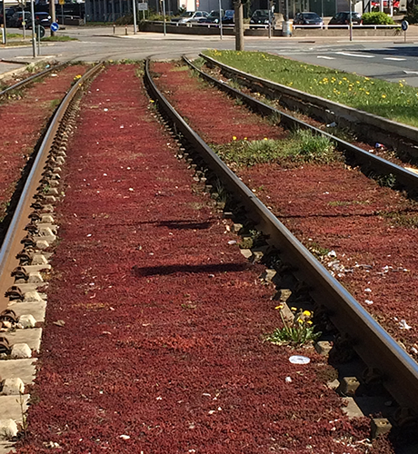 green roof history: track greening in Germany