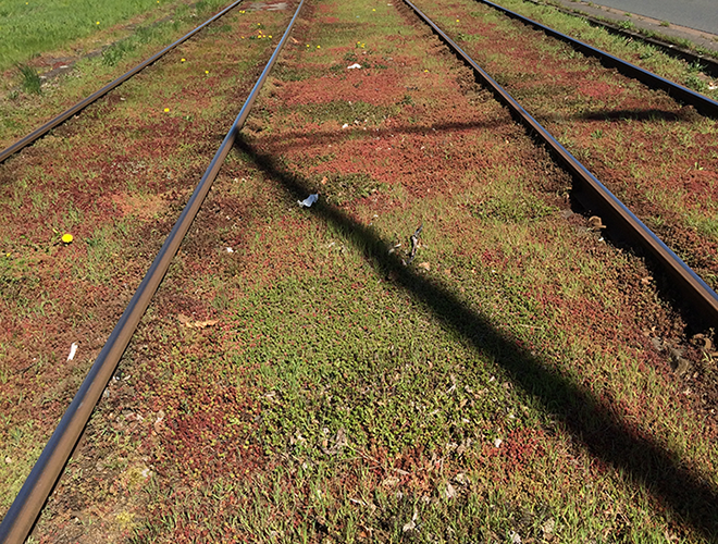 green roof plants: Mineral Wool green Railroad
